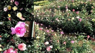 Nursery overview||Nursery visit||Nursery visit||Part:2||Wow Gardening.