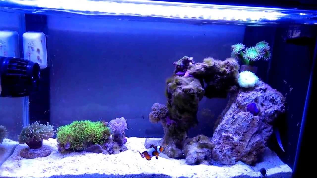 5 gallon fish tank youtube some live plants for the 5 for Fish tank size calculator