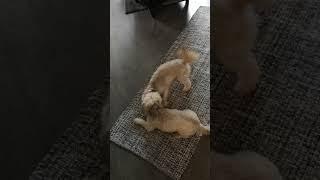 Funny dogs 1 in Upplands-Väsby
