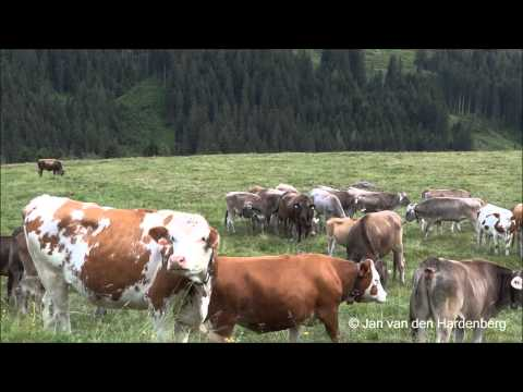 Traditional - Zillertal