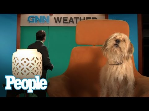 We Interview Anchorman 2′s Baxter, and It's Amazing – Chatter