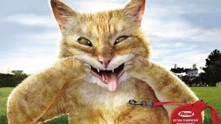 Best funny animals 2014