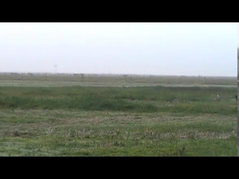 cazando liebres con galgos