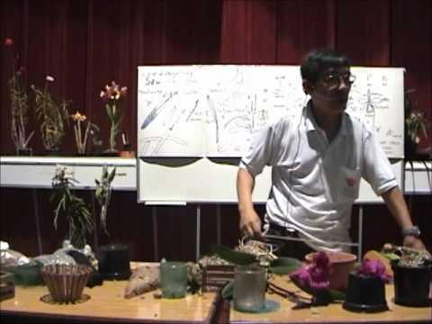 Curso básico de cultivo de Orquídeas - Parte 4