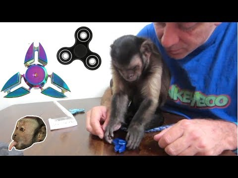 Monkey Fidget Spinner UnBoxing & Review