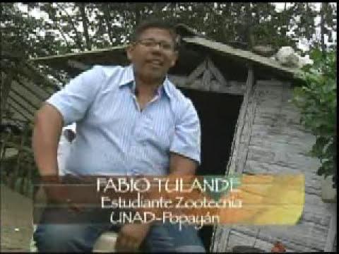 Olor a Región - Levante de cuyes Investigacion para el desarrollo en Popayan PARTE 2