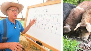 Joel Salatin Teaches Pasture Pigs
