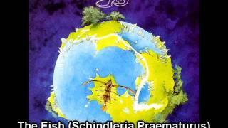 Watch Yes The Fish schindleria Praematurus video