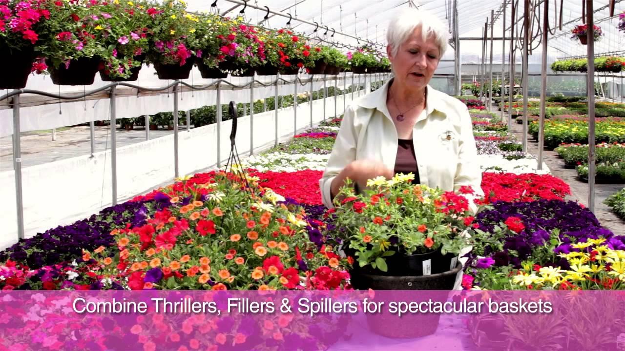 Youtube Hanging Flower Baskets : Fred meyer planting your hanging basket