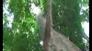 Watch Roy Harper The Tallest Tree video