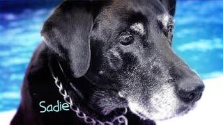 CBS Cares - Charles Osgood on Adopting Shelter Animals
