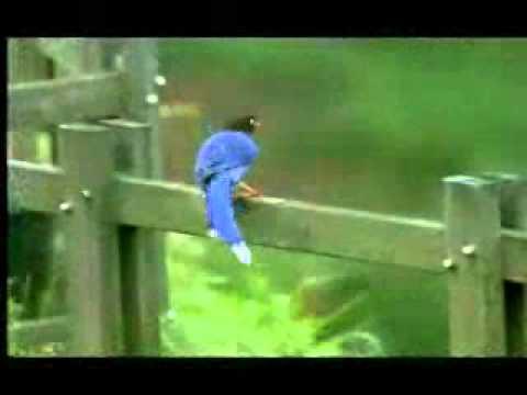 【陽明山國家公園管理處】台灣藍鵲的故事-棲地