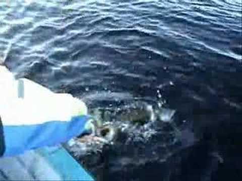 Gäddfiske julafton 2006