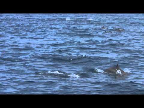 Wildlife of Sri Lanka, Whale watching in Mirissa