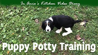 Ania's Video Diary - Puppy Potty Training - Weekly Vlog