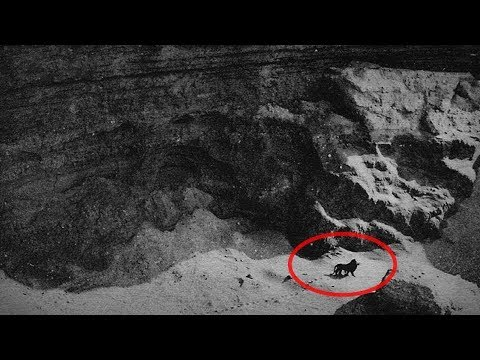10 Последних Фото и Видео Вымерших Животных