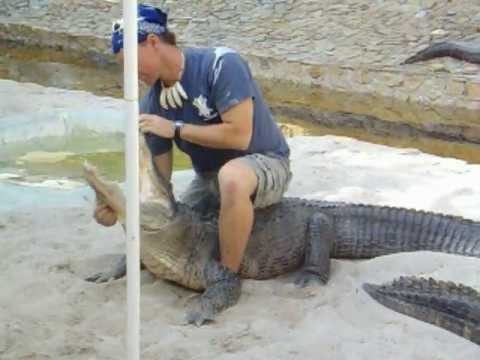 gator boys paul bedard shows off his skills in florida clearly i m
