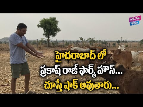 Actor Prakash Raj Farmhouse Near Hyderabad Telangana | Tollywood Latest News | YOYO Cine Talkies