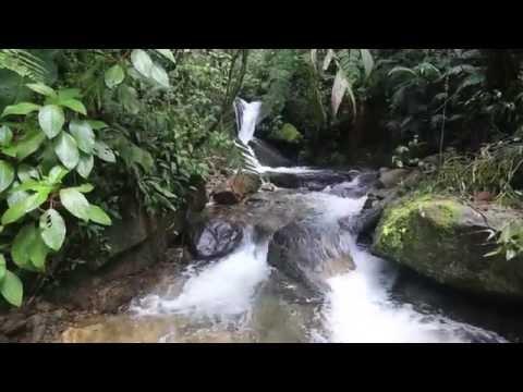 Sendero Culebra Boquete - Panama
