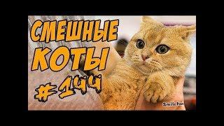 Смешные коты и кошки 2018 Приколы с котами и кошками 2018 Funny Cats 2018