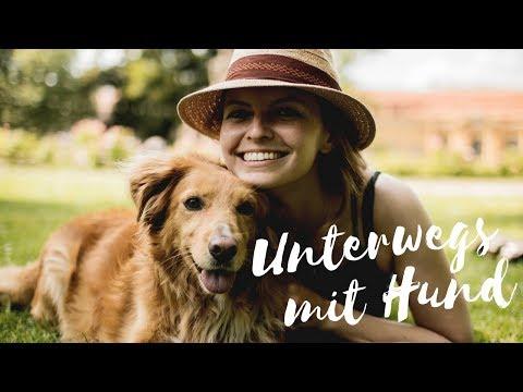 Reisen mit Hund | TIPPS FÜR EINEN URLAUB MIT HUND | Lilies Diary