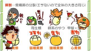 生物3章3話「受精と卵割」byWEB玉塾