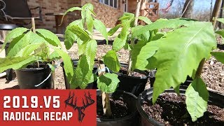 Spring Things - Radical Recap 2019.V5 - Hunting Vlog