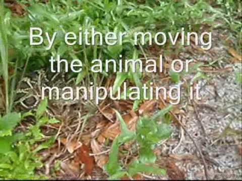 Eastern diamondback rattlesnake videos eastern diamondback