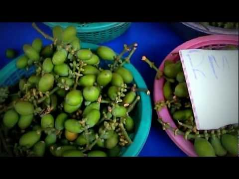 Borneo Fruits & Food-The Sabong fruit nut (Gnetum Gnemon L.) of Sarawak