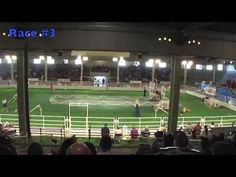 2014 Pig Races ~ Texas State Fair