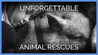 Amazing Animal Rescues That We'll Never Forget