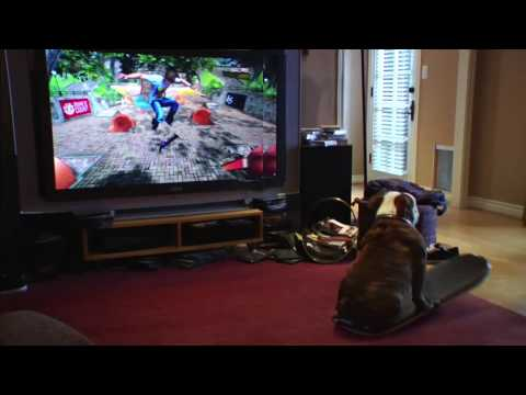 Funny GameVid: Skateboarding dog plays video game