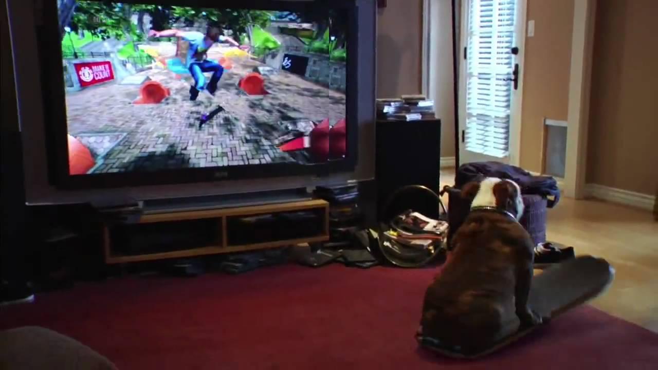 Skateboarding Dog Plays Video