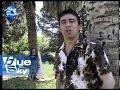 Lulka Merkulaj & Zaim Hasramaj - Po te pres - TV Blue Sky thumbnail