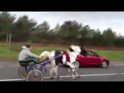 Dangerous Horse Race