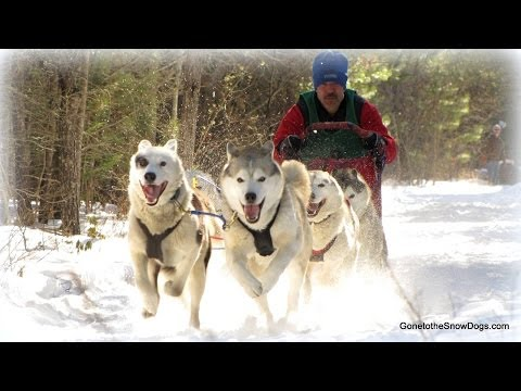 DOG SLED TAKES OUT GOPRO *Snow Dog Short 23*