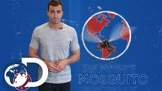 SERIES 101 : MOSQUITO