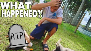 My Animals were ATTACKED!! Here's what happened
