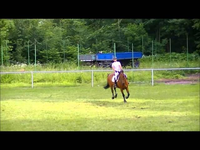 FOR SALE - Rebelka - *2004,Landprinz x Diktant,mare for 1,30m jumping,www.salesporthorses.com