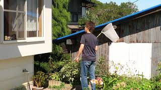 村上真一調査隊 アシナガバチの巣 駆除