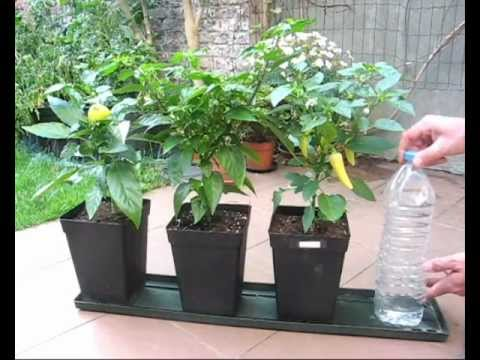 DIY self watering system for pot plants part1 (Hydroponics basic)