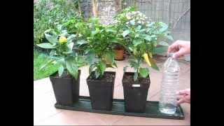 Diy Self Watering System For Pot Plants P ...