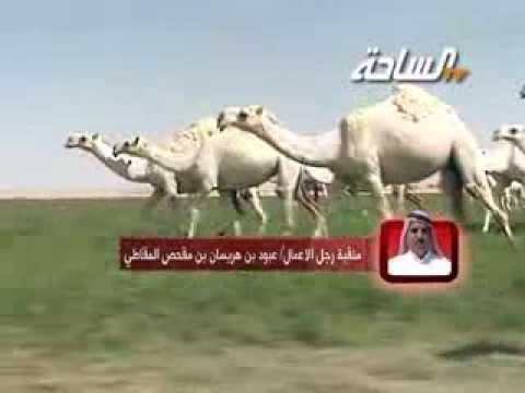 جديد الساحة 1435هـ - 2013 م | منقية رجل الأعمال / عبود بن هريسان بن مقحص المقاطي