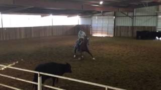 Reyclouse- Jared lesh Cowhorses