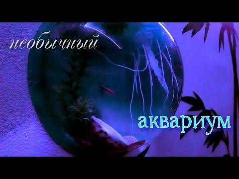 Настенный аквариум/ все подробно