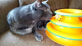 Cats Playing with Petstages Tower of Tracks Cat Toy - Thunder & Jericho