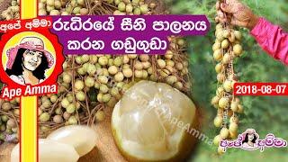 Gaduguda a healthy fruit for diabetics