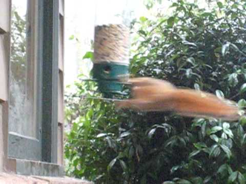 Build A Spinning Squirrel Feeder Circus