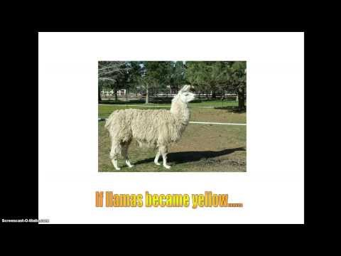 What if llamas became yellow?