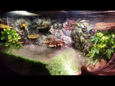 Custom DIY reptile enclosure ( Green basilisk )